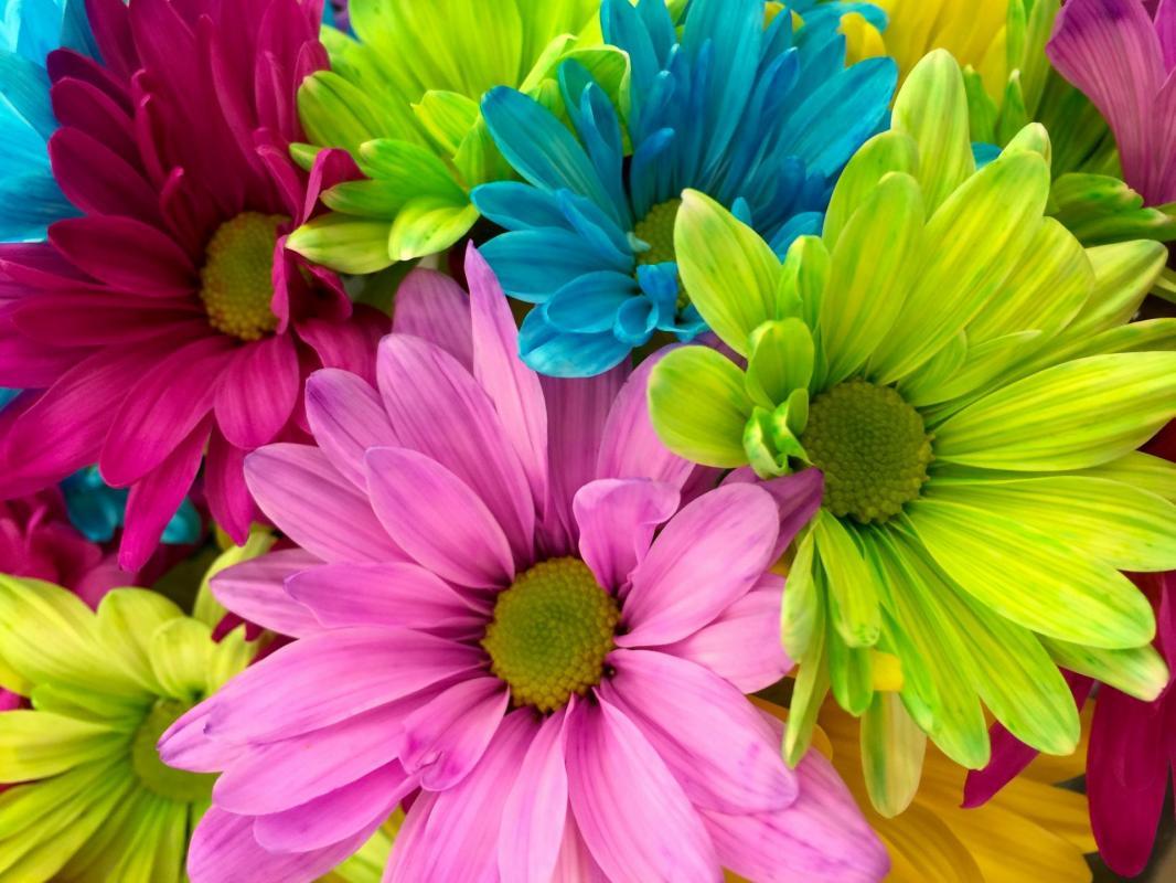 bouquet de fleurs coloré joie bonheur