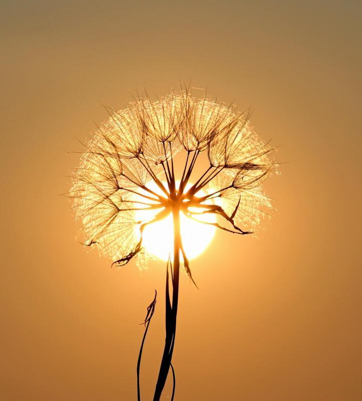 fleur et soleil énergétique chakra harmanisation