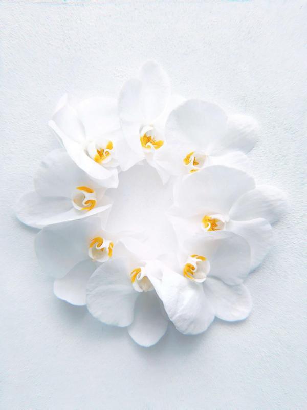 fleur blanche calme relaxation